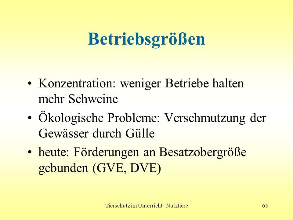 Tierschutz im Unterricht - Nutztiere65 Betriebsgrößen Konzentration: weniger Betriebe halten mehr Schweine Ökologische Probleme: Verschmutzung der Gew