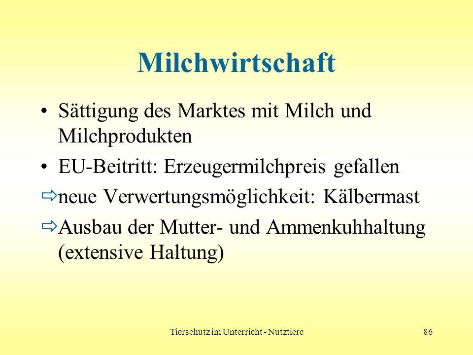 Tierschutz im Unterricht - Nutztiere86 Milchwirtschaft Sättigung des Marktes mit Milch und Milchprodukten EU-Beitritt: Erzeugermilchpreis gefallen neu