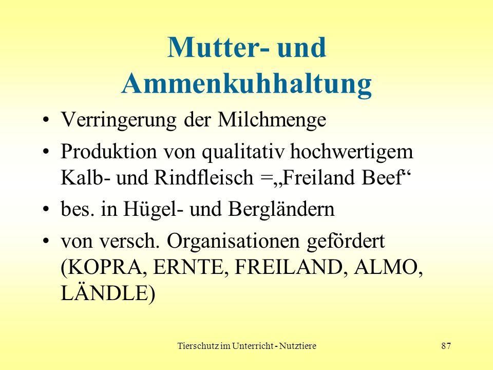 Tierschutz im Unterricht - Nutztiere87 Mutter- und Ammenkuhhaltung Verringerung der Milchmenge Produktion von qualitativ hochwertigem Kalb- und Rindfl
