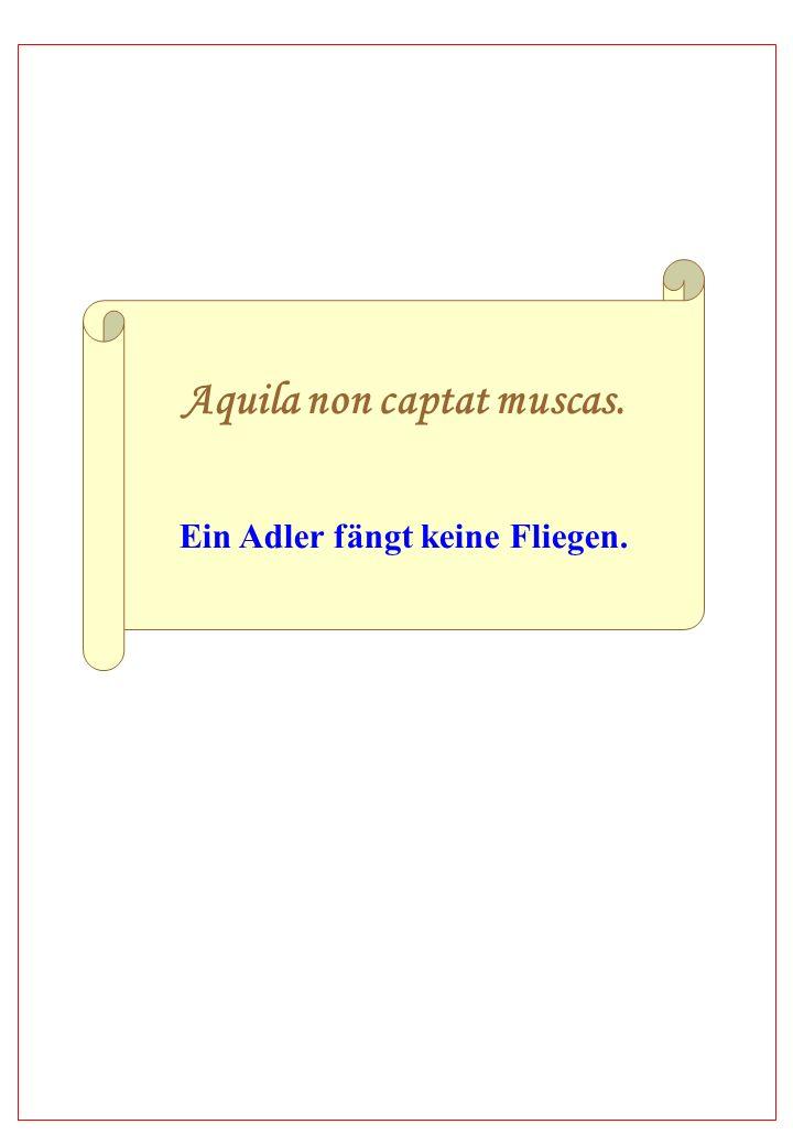 Aquila non captat muscas. Ein Adler fängt keine Fliegen.