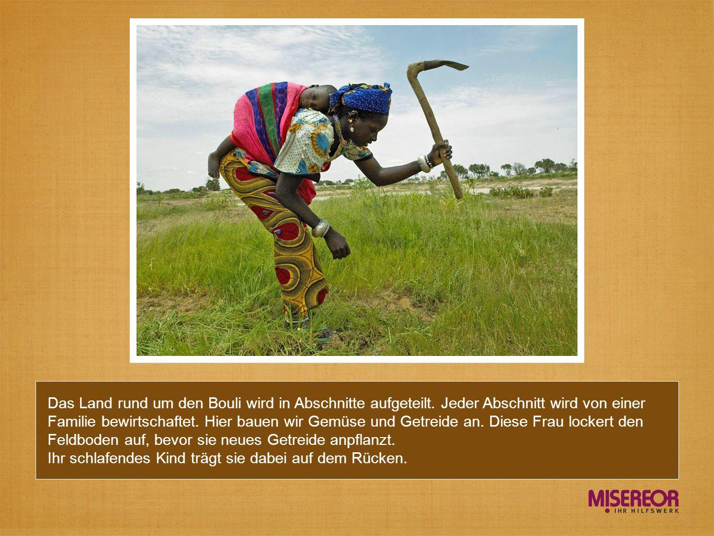 Das Land rund um den Bouli wird in Abschnitte aufgeteilt. Jeder Abschnitt wird von einer Familie bewirtschaftet. Hier bauen wir Gemüse und Getreide an