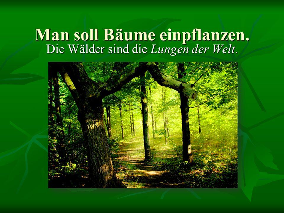 Man soll Bäume einpflanzen. Die Wälder sind die Lungen der Welt.
