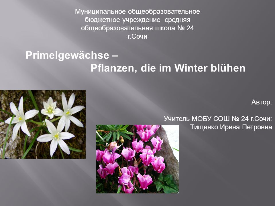 Schon am Anfang Februar kann man in der Stadt viele Leute sehen, die kleine, zarte und bunte Blumensträußer verkaufen.