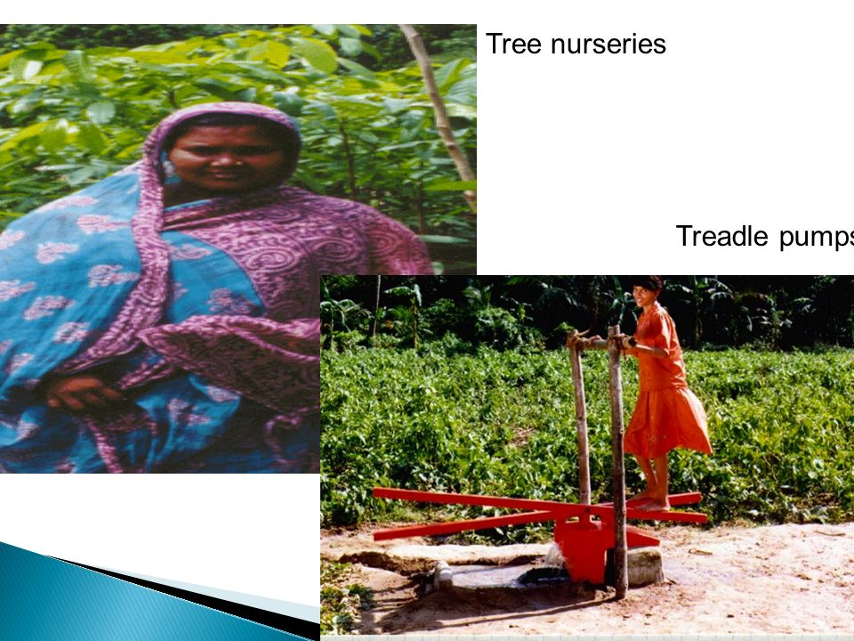 Tree nurseries Treadle pumps