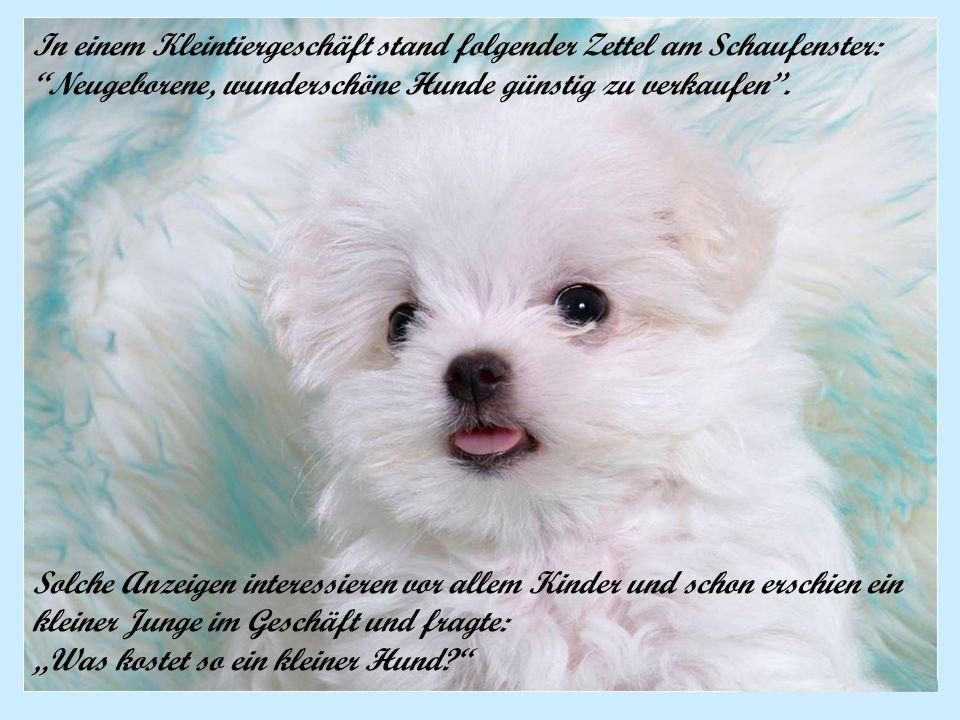 In einem Kleintiergeschäft stand folgender Zettel am Schaufenster: Neugeborene, wunderschöne Hunde günstig zu verkaufen. Solche Anzeigen interessieren