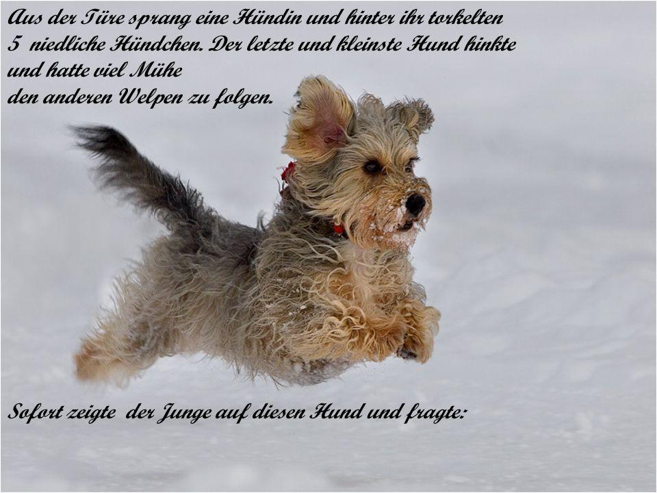 Aus der Türe sprang eine Hündin und hinter ihr torkelten 5 niedliche Hündchen. Der letzte und kleinste Hund hinkte und hatte viel Mühe den anderen Wel