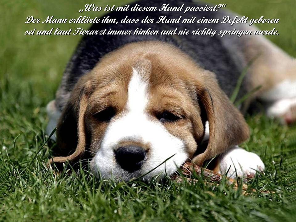 Was ist mit diesem Hund passiert? Der Mann erklärte ihm, dass der Hund mit einem Defekt geboren sei und laut Tierarzt immer hinken und nie richtig spr