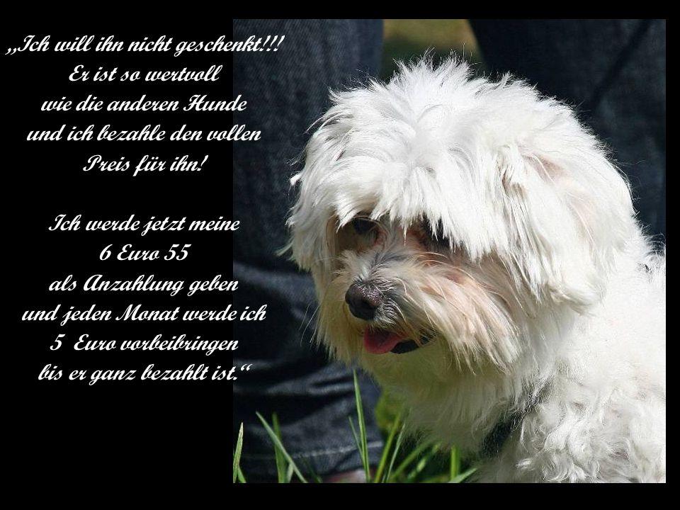 Ich will ihn nicht geschenkt!!! Er ist so wertvoll wie die anderen Hunde und ich bezahle den vollen Preis für ihn! Ich werde jetzt meine 6 Euro 55 als