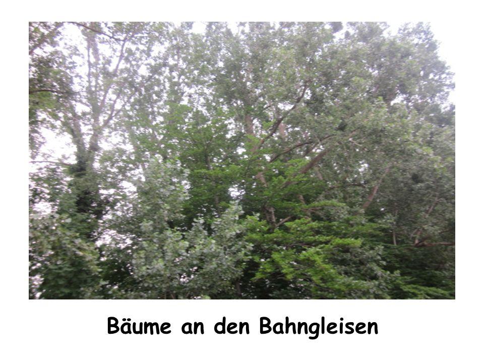 Bäume an den Bahngleisen