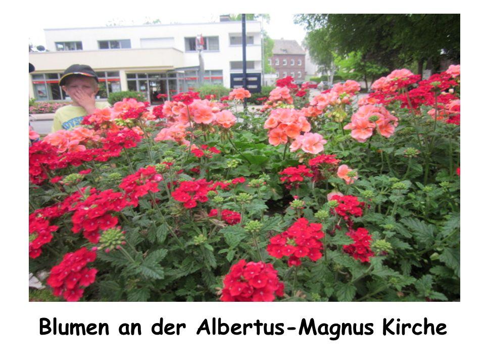 Blumen an der Albertus-Magnus Kirche