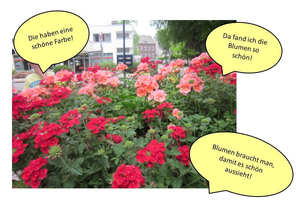 Da fand ich die Blumen so schön! Die haben eine schöne Farbe! Blumen braucht man, damit es schön aussieht!