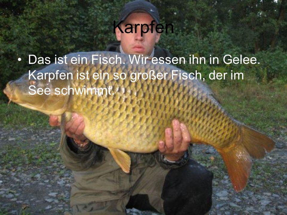 Karpfen Das ist ein Fisch. Wir essen ihn in Gelee. Karpfen ist ein so großer Fisch, der im See schwimmt.