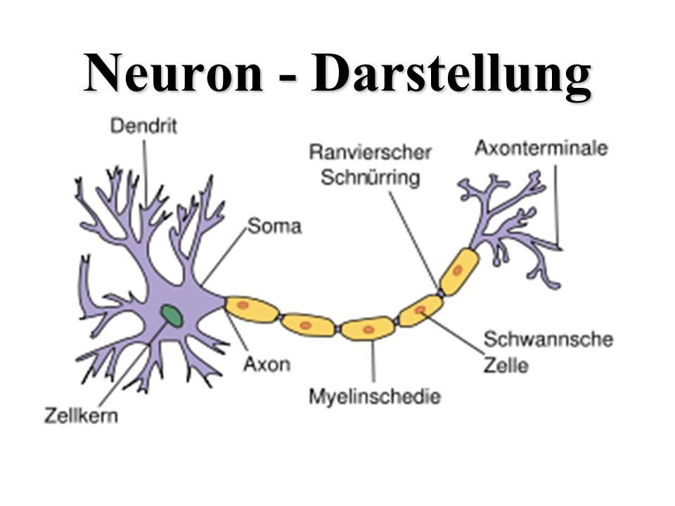 Neuron - Darstellung