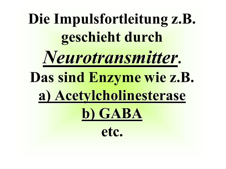 Neurotransmitter a) Acetylcholinesterase b) GABA Die Impulsfortleitung z.B. geschieht durch Neurotransmitter. Das sind Enzyme wie z.B. a) Acetylcholin