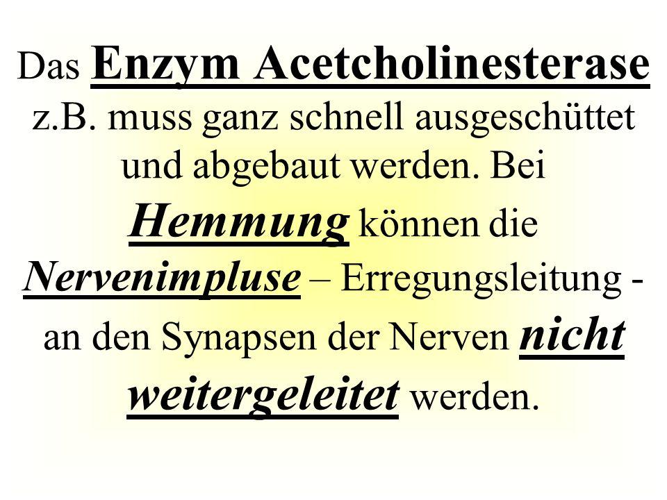 Enzym Acetcholinesterase Das Enzym Acetcholinesterase z.B. muss ganz schnell ausgeschüttet und abgebaut werden. Bei Hemmung können die Nervenimpluse –
