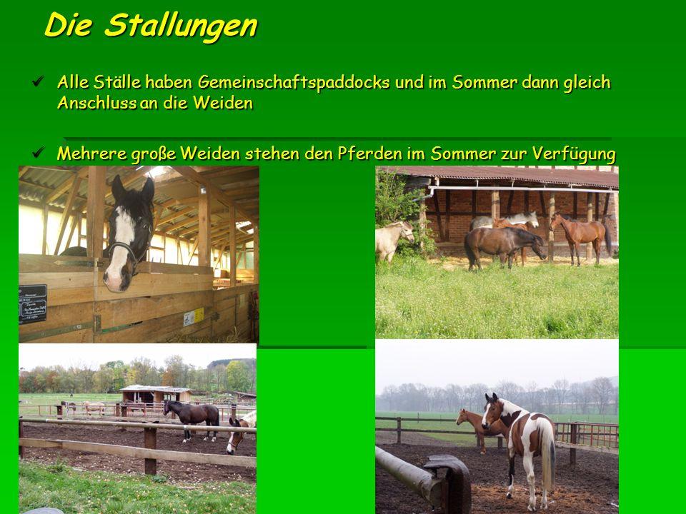 Die Stallungen Alle Ställe haben Gemeinschaftspaddocks und im Sommer dann gleich Anschluss an die Weiden Alle Ställe haben Gemeinschaftspaddocks und im Sommer dann gleich Anschluss an die Weiden Mehrere große Weiden stehen den Pferden im Sommer zur Verfügung Mehrere große Weiden stehen den Pferden im Sommer zur Verfügung