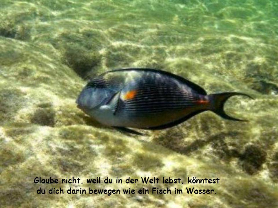 Glaube nicht, weil du in der Welt lebst, könntest du dich darin bewegen wie ein Fisch im Wasser.