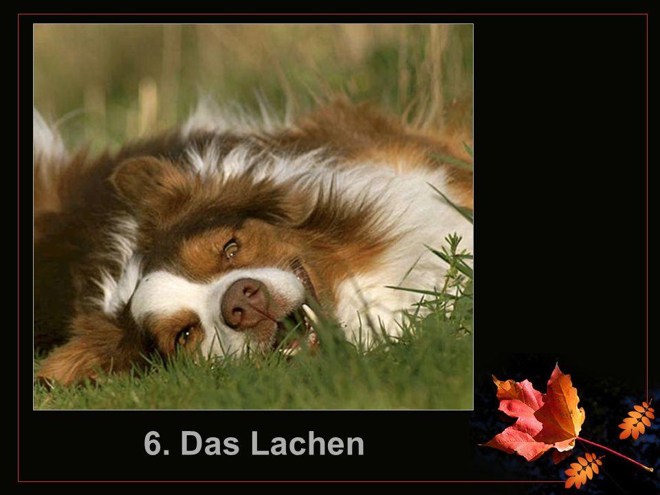 5. Der Geruch