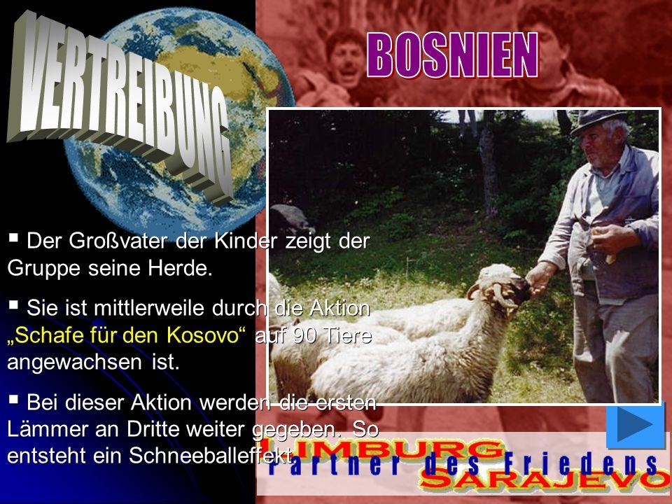 Der Großvater der Kinder zeigt der Gruppe seine Herde. Sie ist mittlerweile durch die Aktion Schafe für den Kosovo auf 90 Tiere angewachsen ist. Sie i
