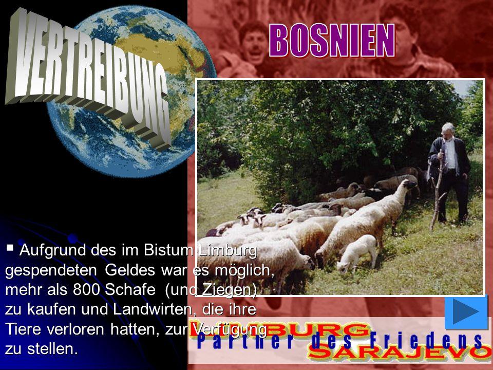 Aufgrund des im Bistum Limburg gespendeten Geldes war es möglich, mehr als 800 Schafe (und Ziegen) zu kaufen und Landwirten, die ihre Tiere verloren h