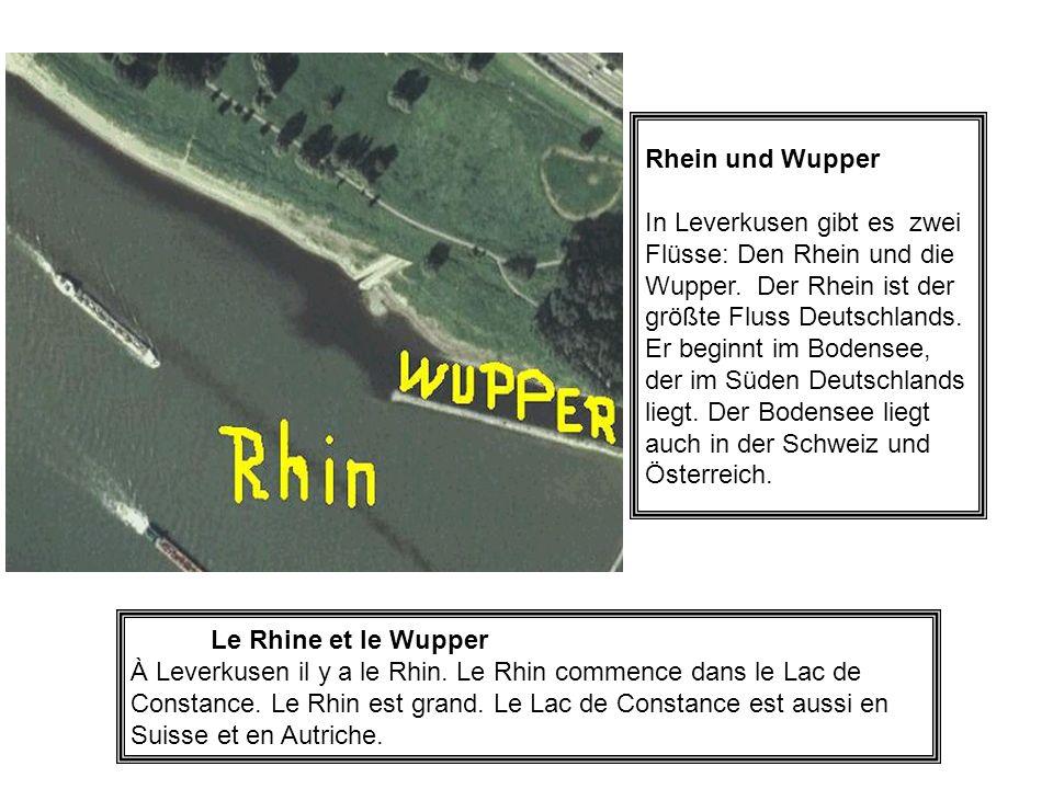 Rhein und Wupper In Leverkusen gibt es zwei Flüsse: Den Rhein und die Wupper. Der Rhein ist der größte Fluss Deutschlands. Er beginnt im Bodensee, der