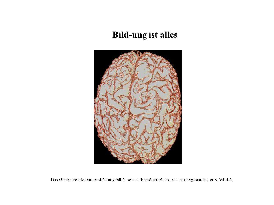 Bild-ung ist alles Das Gehirn von Männern sieht angeblich so aus.