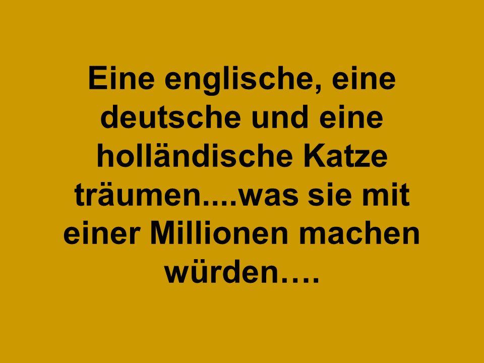 Eine englische, eine deutsche und eine holländische Katze träumen....was sie mit einer Millionen machen würden….