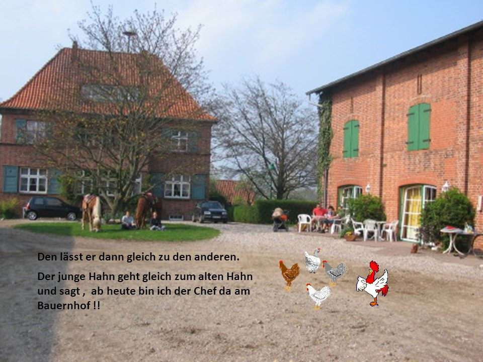 Auf einem Bauernhof denkt sich der Bauer mein Hahn ist schon ziemlich alt der bringt es nicht mehr, ich muss einen jungen kaufen.