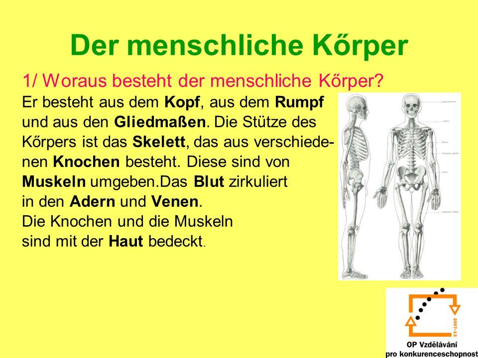 Der menschliche Kőrper 1/ Woraus besteht der menschliche Kőrper? Er besteht aus dem Kopf, aus dem Rumpf und aus den Gliedmaßen. Die Stütze des Kőrpers