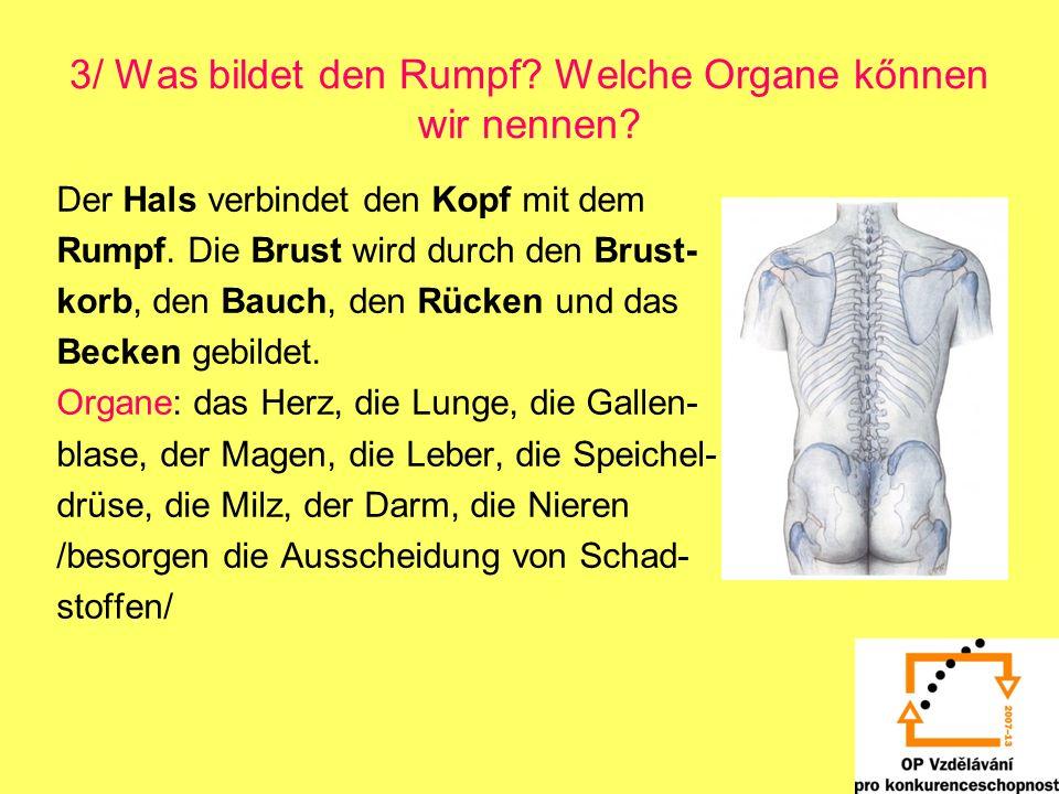 3/ Was bildet den Rumpf? Welche Organe kőnnen wir nennen? Der Hals verbindet den Kopf mit dem Rumpf. Die Brust wird durch den Brust- korb, den Bauch,