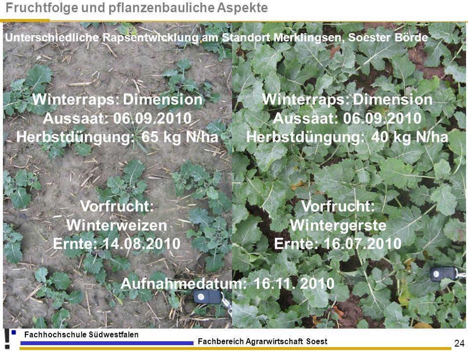 Fachbereich Agrarwirtschaft Soest Fachhochschule Südwestfalen 24 Winterraps: Dimension Aussaat: 06.09.2010 Herbstdüngung: 65 kg N/ha Winterraps: Dimen