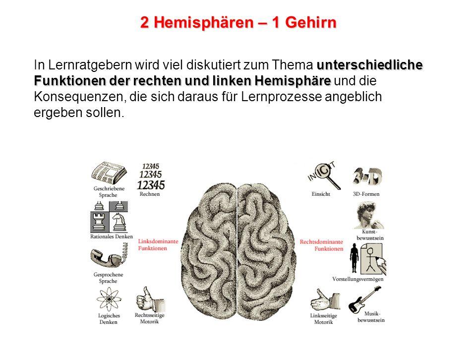 2 Hemisphären – 1 Gehirn Ab einem Lebensalter von etwa 25 Jahren löst sich die Konzentration des Sprachzentrums auf eine Hemisphäre immer mehr auf, sodass ältere Erwachsene zunehmend beide Hemisphären für ihre sprachlichen Fähigkeiten nutzen.
