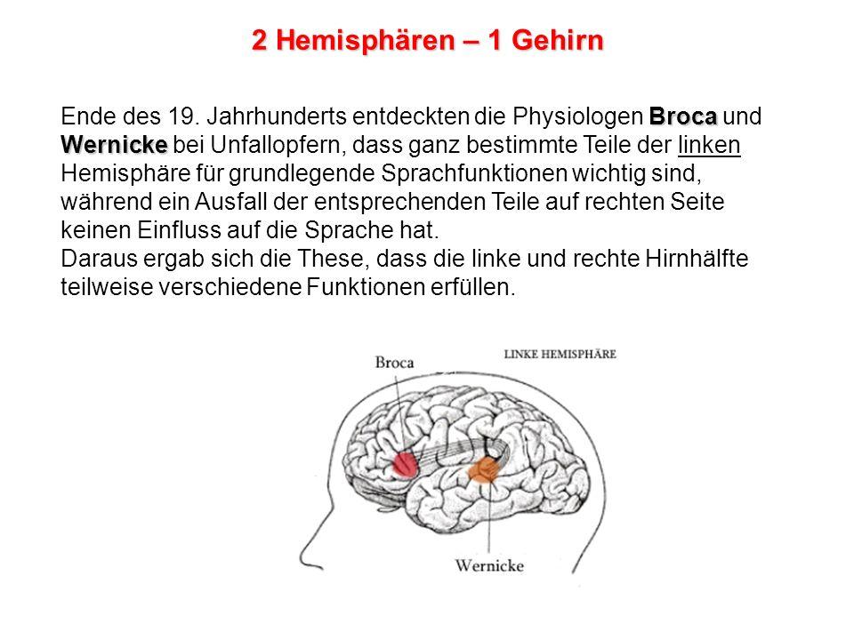 Broca Wernicke Ende des 19.