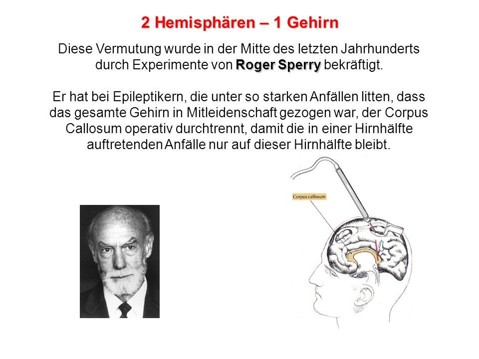 split-brain Bei diesen split-brain -Patienten entdeckte Sperry eine Reihe kognitiver Ausfälle, aus denen er auf die unterschiedlichen Funktionen der beiden Hirnhälfte schliessen konnte.