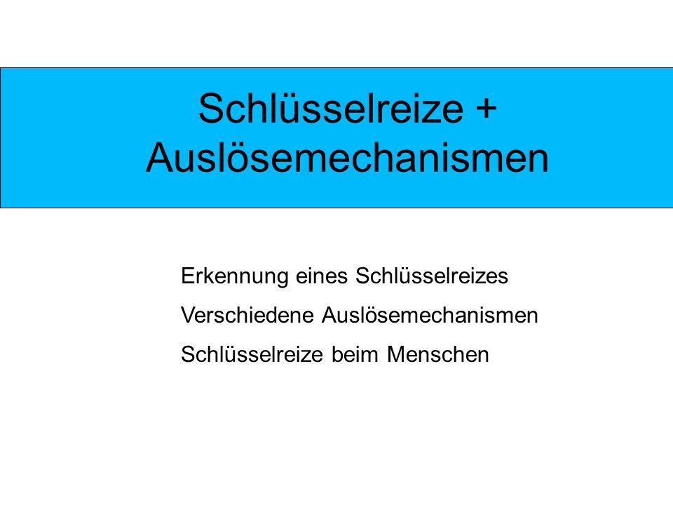 Quellen http://images.google.de/imgres?imgurl=http://nightmage.ni.funpic.de/nightmage/webseite/Neue_Dateien/menschen/figur/figur01.jpg&imgrefurl=http: //online-zeichenkurs.de/pages/menschen-zeichnen/die-figur.php&usg=__pkGll4oxCeSU2oHfY- UEvUab1TM=&h=290&w=300&sz=39&hl=de&start=1&um=1&tbnid=EbnE8fv7AW4u3M:&tbnh=112&tbnw=116&prev=/images%3Fq%3Dpropo rtionen%2Bmann%2Bfrau%26um%3D1%26hl%3Dde%26rls%3DGFRC,GFRC:2006-51,GFRC:de%26sa%3DN http://de.encarta.msn.com/encyclopedia_721537563/Schl%C 3%BCsselreiz.html