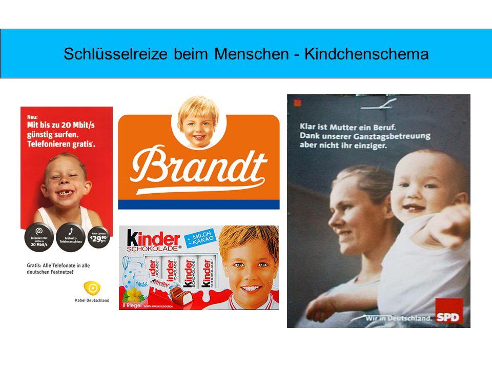 Schlüsselreize beim Menschen - Kindchenschema