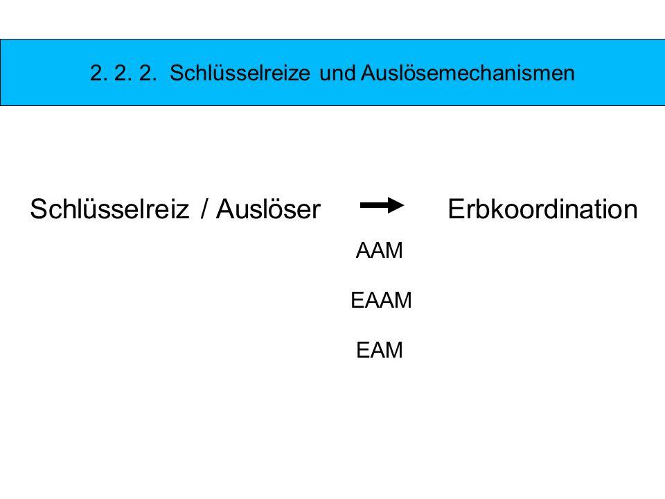 Schlüsselreiz / Auslöser Erbkoordination AAM EAAM EAM 2. 2. 2. Schlüsselreize und Auslösemechanismen