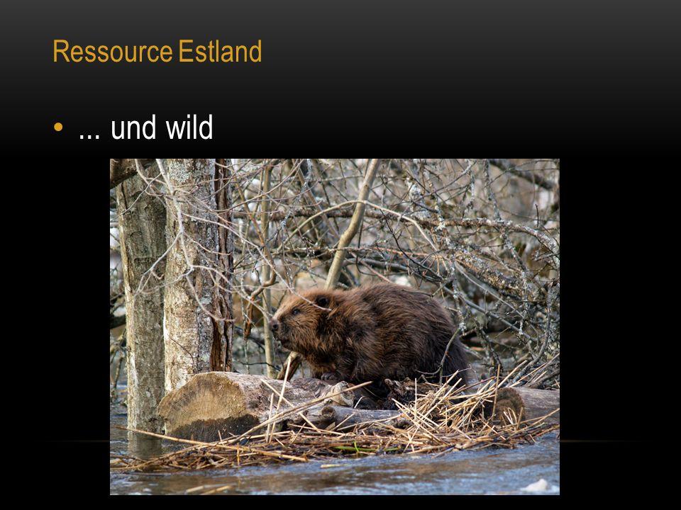 Ressource Estland... und wild