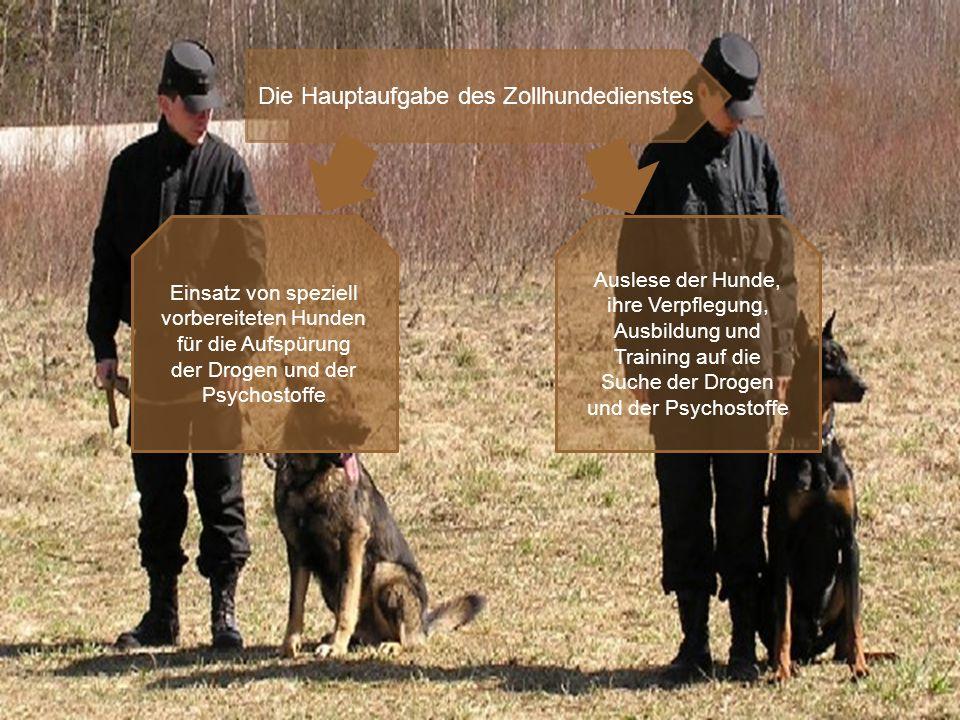 Die Hauptaufgabe des Zollhundedienstes Einsatz von speziell vorbereiteten Hunden für die Aufspürung der Drogen und der Psychostoffe Auslese der Hunde, ihre Verpflegung, Ausbildung und Training auf die Suche der Drogen und der Psychostoffe