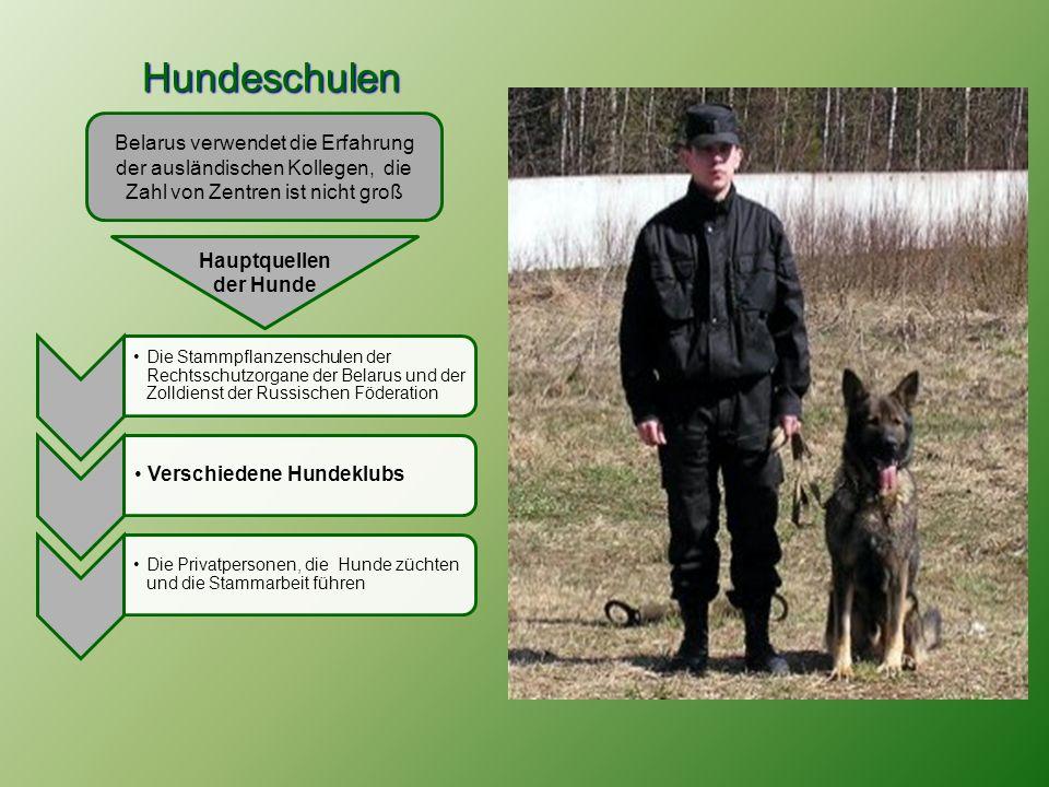 Hundeschulen Hundeschulen Belarus verwendet die Erfahrung der ausländischen Kollegen, die Zahl von Zentren ist nicht groß Die Stammpflanzenschulen der Rechtsschutzorgane der Belarus und der Zolldienst der Russischen Föderation Verschiedene Hundeklubs Die Privatpersonen, die Hunde züchten und die Stammarbeit führen Hauptquellen der Hunde