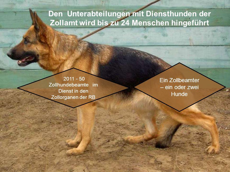 Den Unterabteilungen mit Diensthunden der Zollamt wird bis zu 24 Menschen hingeführt 2011 - 50 Zollhundebeamte im Dienst in den Zollorganen der RB Ein Zollbeamter – ein oder zwei Hunde