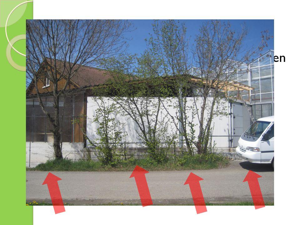 Ideen & Umsetzung Aufräumen und Bepflanzung freier Stellen Auffrischung des Verkaufshäuschen