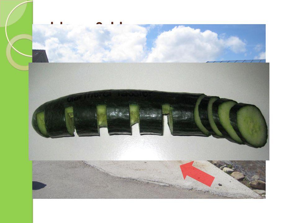 Ideen & Umsetzung Parkplatzverschiebung Freie Stelle nutzen Gurken- Veloständer Erste Entwürfe Umsetzbar mit der Schreinerei Tobler (Neukirch-Egnach)