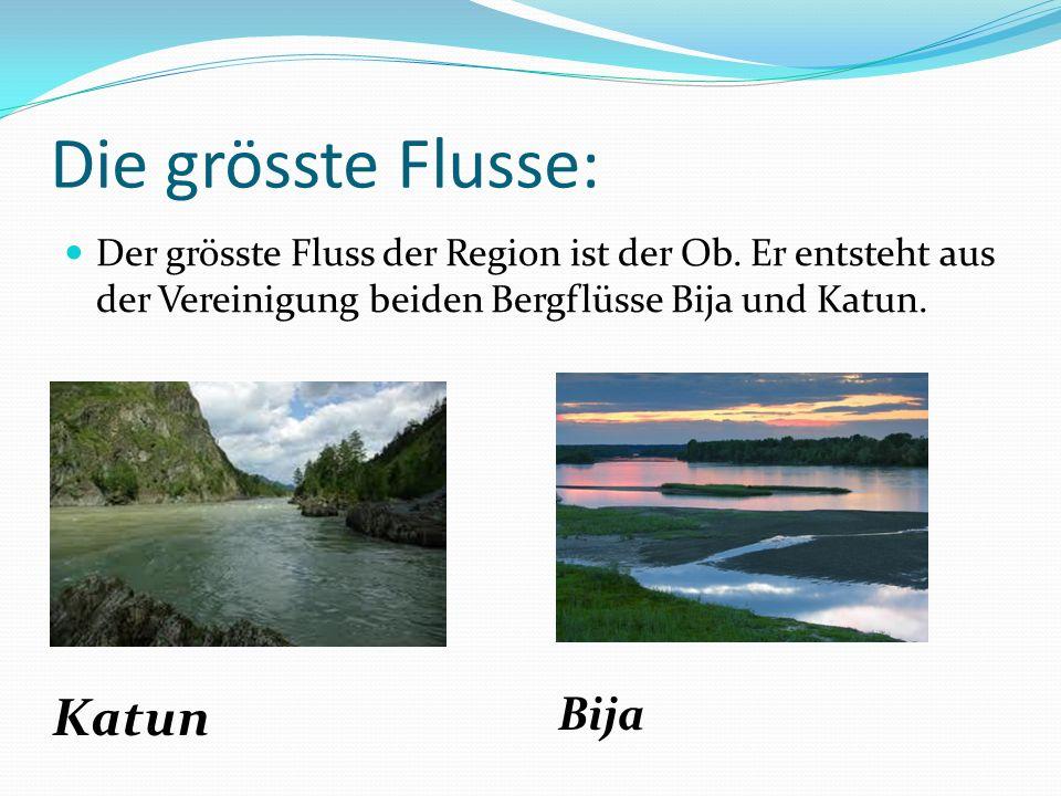 Die grösste Flusse: Der grösste Fluss der Region ist der Ob. Er entsteht aus der Vereinigung beiden Bergflüsse Bija und Katun. Katun Bija