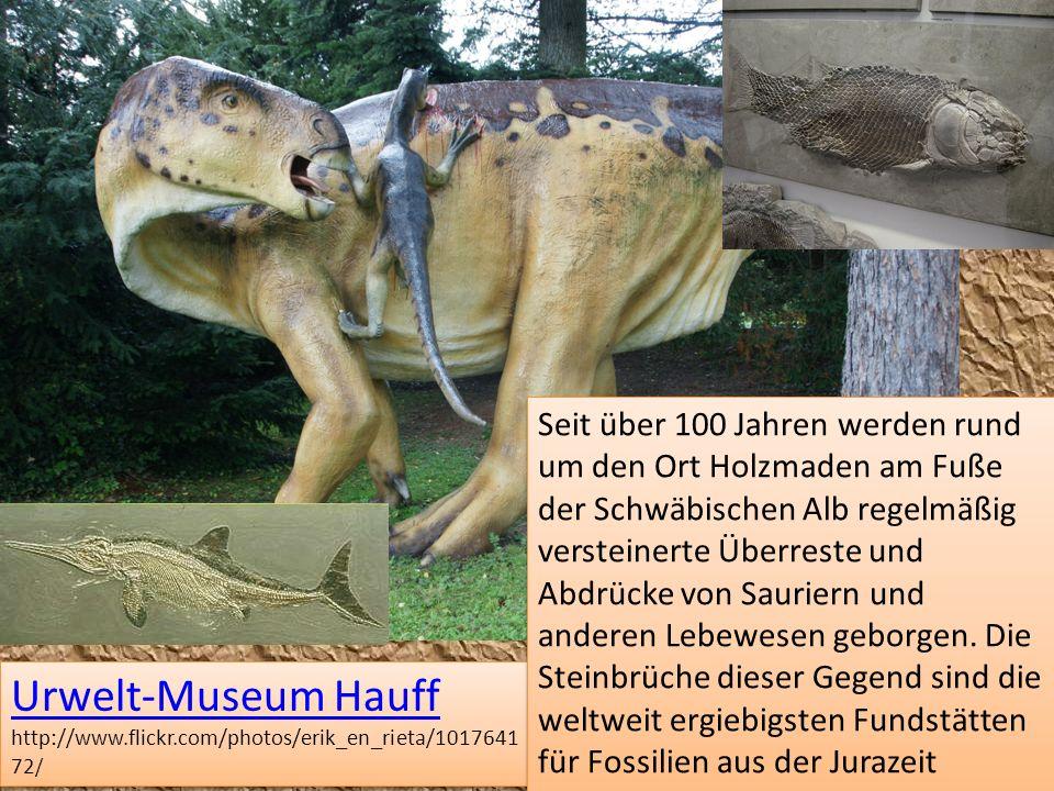 Urwelt-Museum Hauff Urwelt-Museum Hauff http://www.flickr.com/photos/erik_en_rieta/1017641 72 / Urwelt-Museum Hauff Urwelt-Museum Hauff http://www.fli