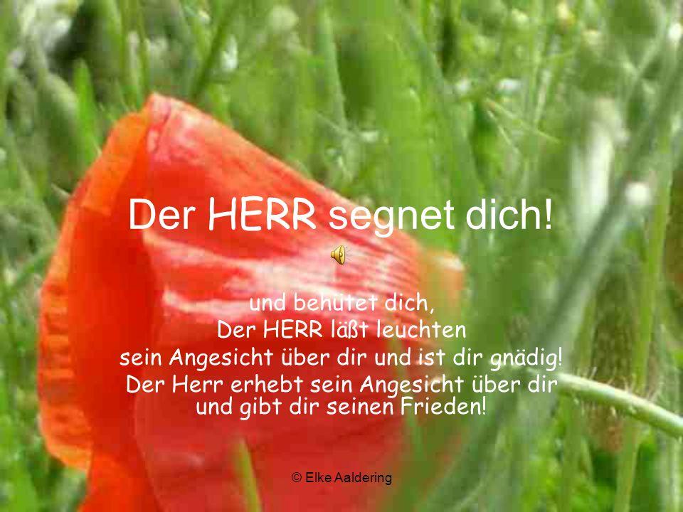 © Elke Aaldering Der HERR segnet dich.