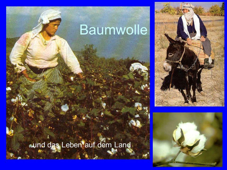 67..und das Leben auf dem Land Baumwolle