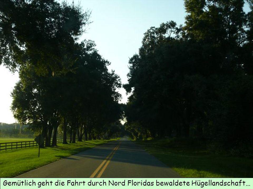 Gemütlich geht die Fahrt durch Nord Floridas bewaldete Hügellandschaft…