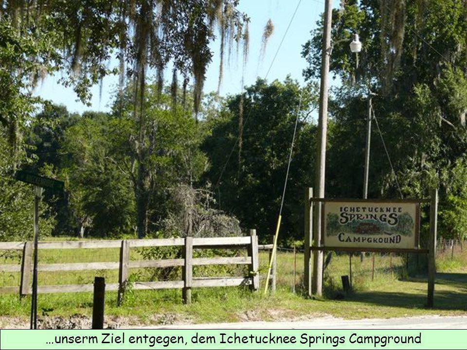 …unserm Ziel entgegen, dem Ichetucknee Springs Campground