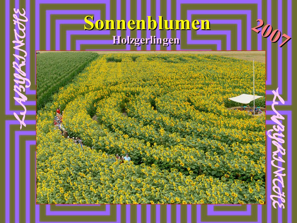 Sonnenblumen Holzgerlingen 2007